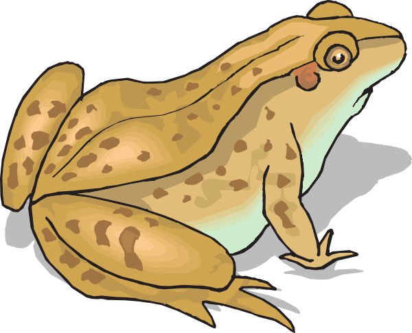 Amphibian clipart spotted Toad #1 clipart toad Clipart