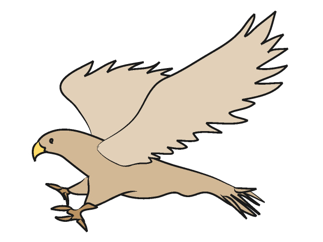Cooper's Hawk clipart Hawk Hawk #8 Download Download