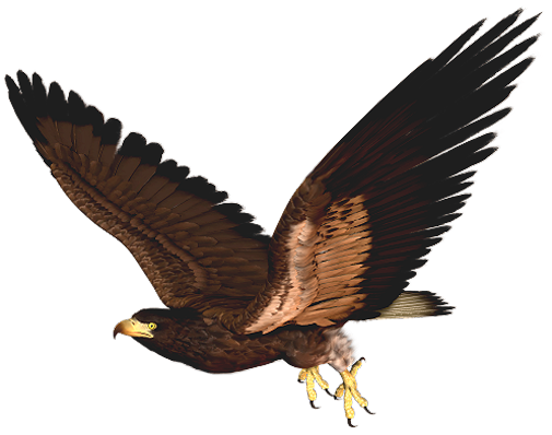 Harris Hawk clipart Cliparts Hawk 2 free Clipart