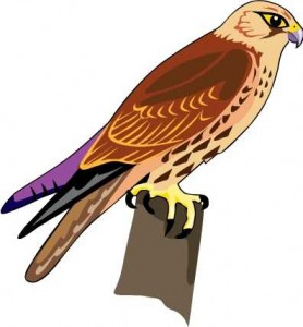 Cooper's Hawk clipart And help to The see