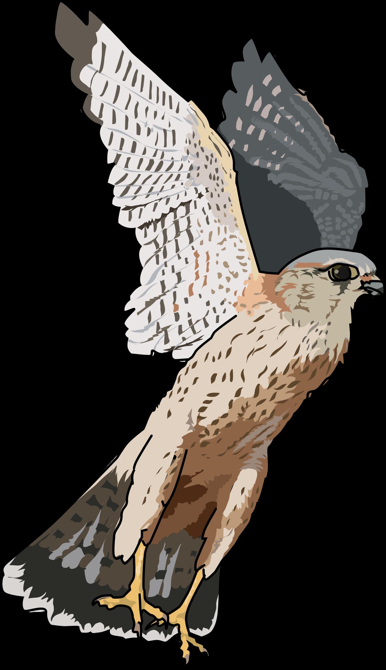 Peregrine Falcon clipart transparent PNG PNG PNG Transparent Falcon