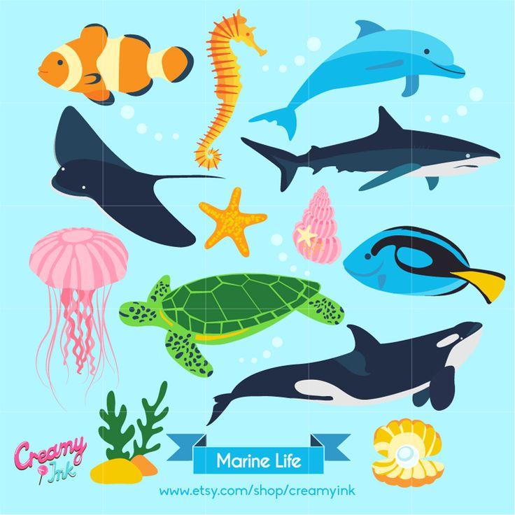 Sea Turtle clipart aquatic #7