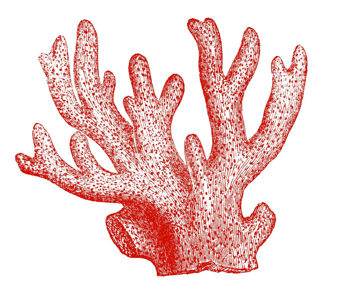 Reef clipart Clipart Images Clipartix coral reef