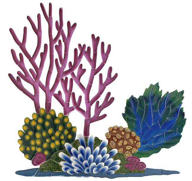 Reef clipart Your This on Nature task