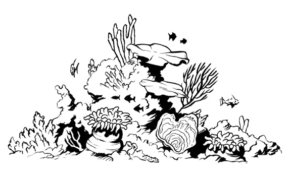Drawn ocean ocean life Reef And and White Clipart