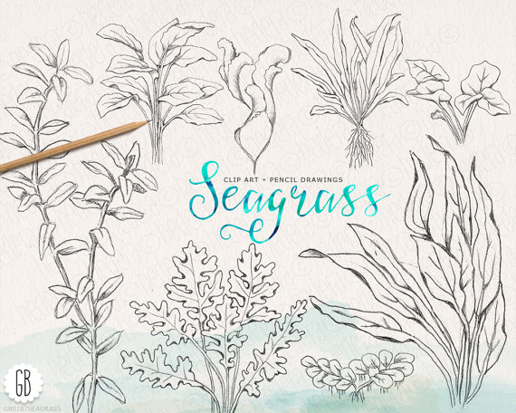 Seaweed clipart seagrass #14