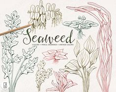 Drawn seaweed seagrass Sea ETC Coral Crafts Draw