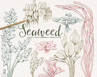 Drawn seaweed seagrass Sea Etsy colors Seaweeds seagrasses