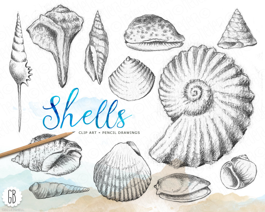 Drawn shell themed Inspired vintage drawn vintage Shells