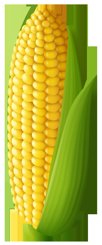 Corn clipart Clip Art Clipart – Art