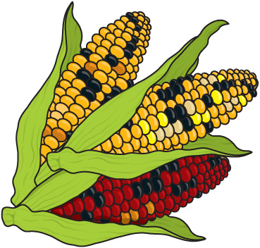 Corn clipart Vegetable downloadclipart toprn images tattoos