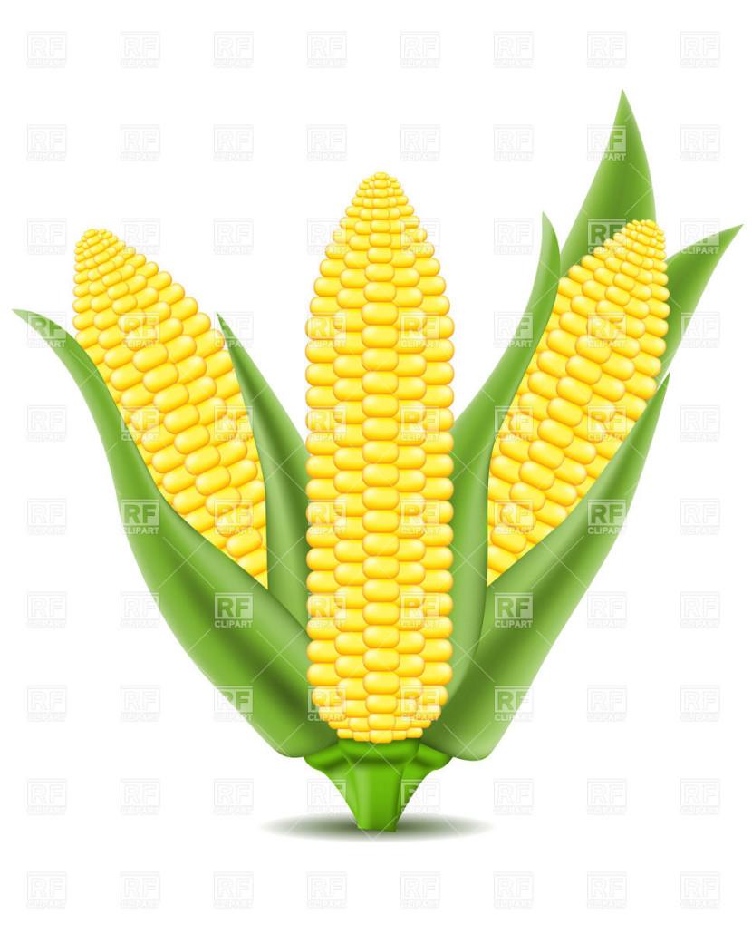 Corn clipart Clip Clip #21905 Art Art