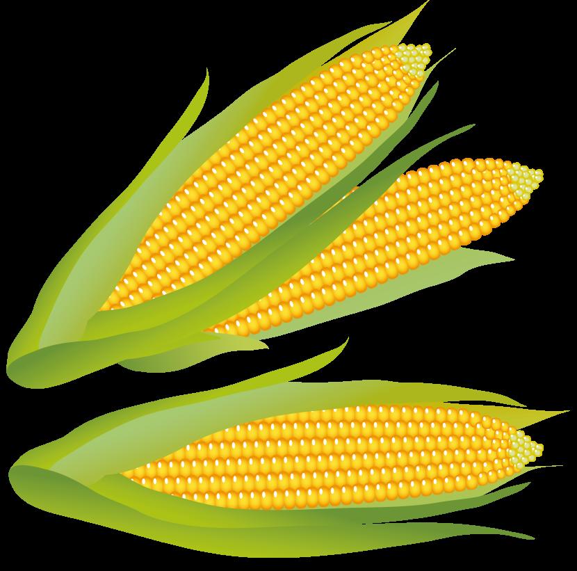 Corn clipart Corn Clipart Free Panda Clip