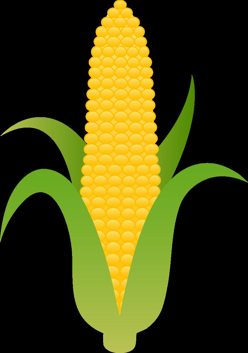 Corn clipart Rn art Cliparting clipart clipart