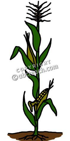 Plant clipart corn stalk Stalk Corn Corn Pinterest Corn