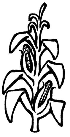Plant clipart corn stalk Pinterest corn Search centennial stalks