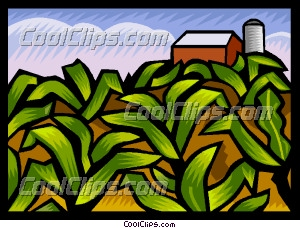 Cornfield clipart rice crop Art Corn Art Field Corn