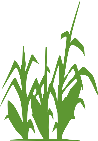 Cornfield clipart corn farm 2 field com Cliparting kid