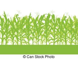 Cornfield clipart Corn collection Clipart field Clipart