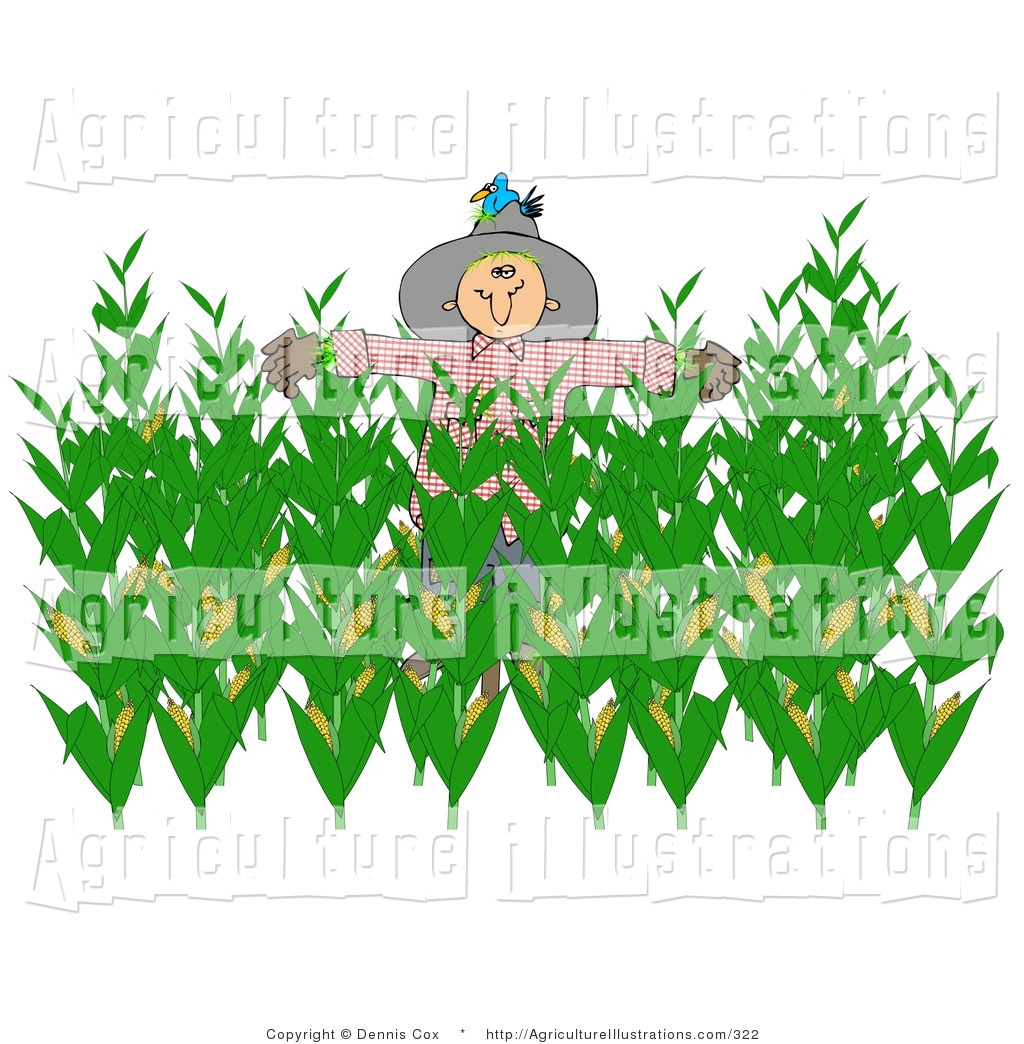 Cornfield clipart rice crop Green Royalty in Scarecrow of