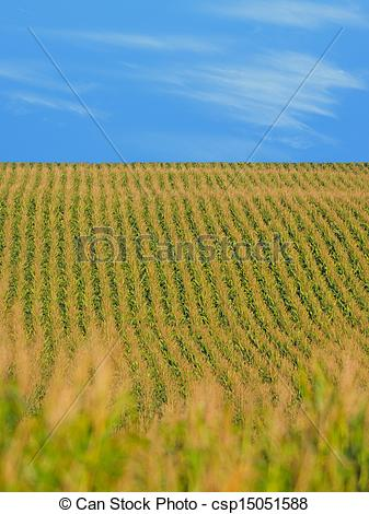 Cornfield clipart vineyard On a Rows stalks of