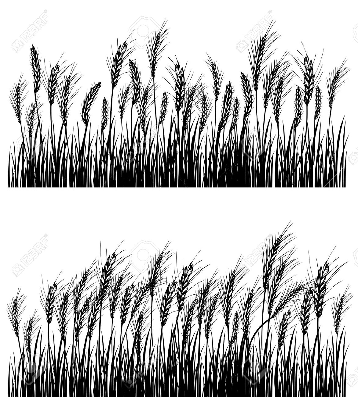 Cornfield clipart wheat plant Black white white black and