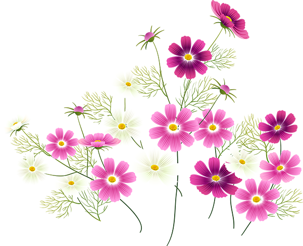 Wildflower clipart cosmos flower Flowers  and Tubes Pinterest