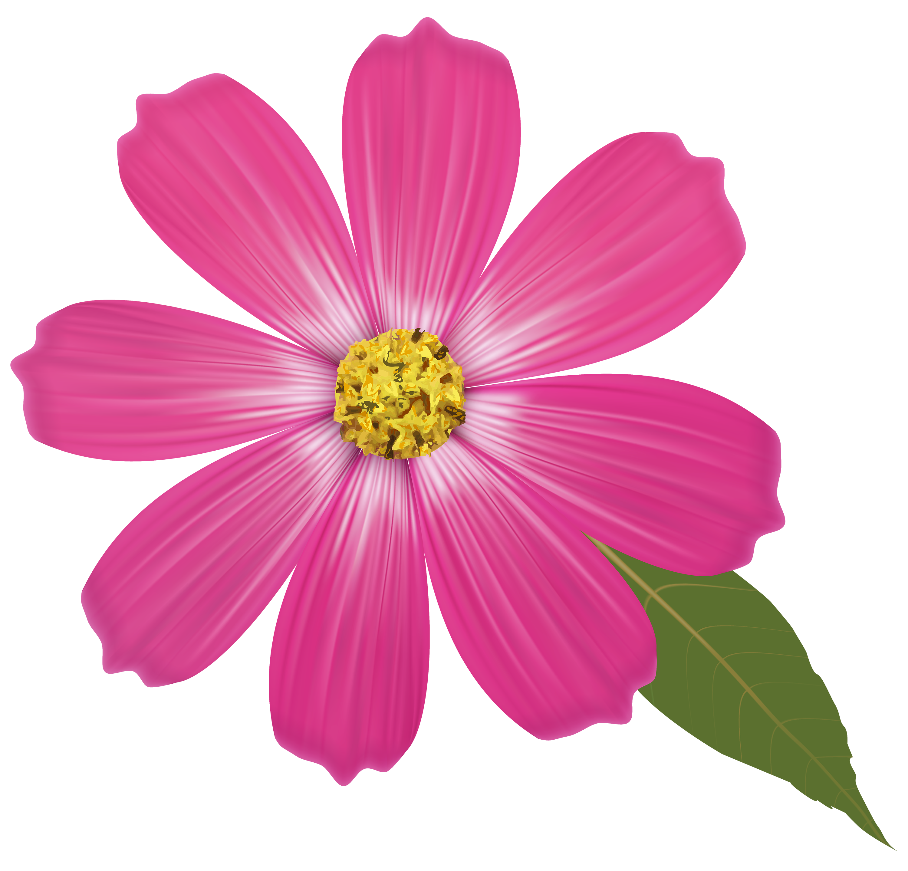 Cosmos clipart WEB Pink CLIPART Pink Clipart