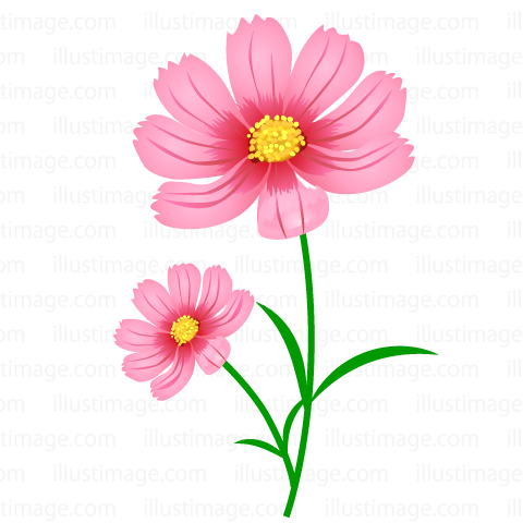 Cosmos clipart The Blooming Graphics Summary】Cosmos &