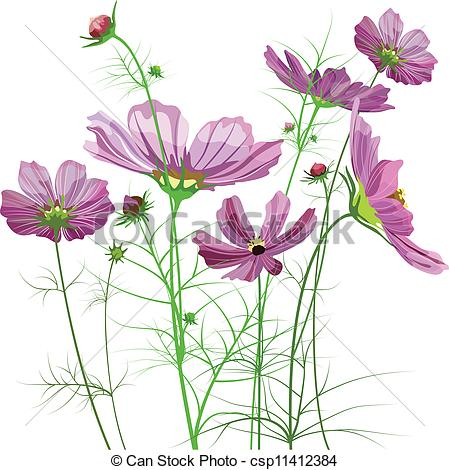Cosmos clipart spring grass  Cosmos and flowers Vector