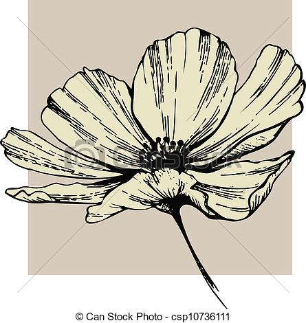 Cosmos clipart black and white Cosmos of Clip Search Art