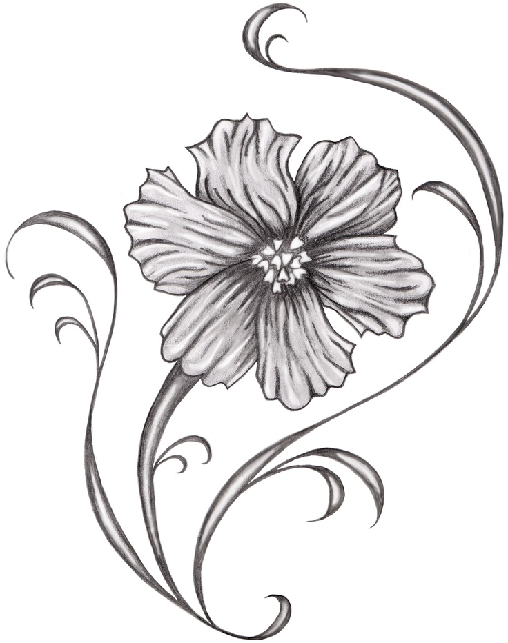 Cosmos clipart black and white Cosmos+flower+tattoo Flower cosmos+flower+tattoo  Cosmos