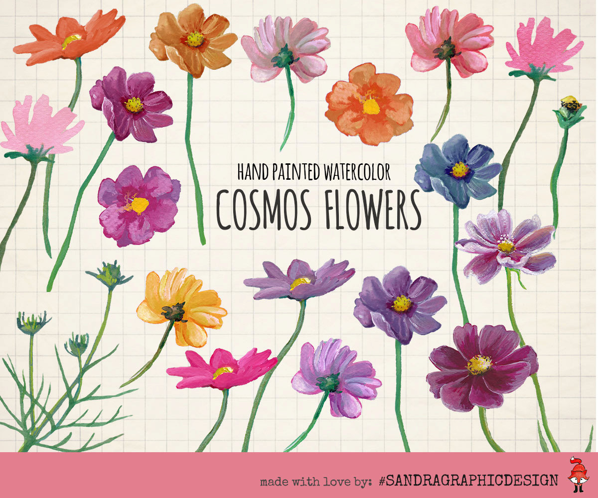 Wildflower clipart cosmos flower Art: painted watercolor hand file