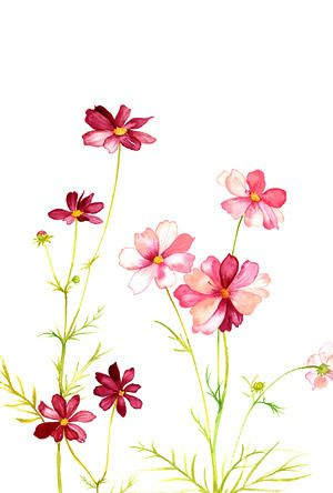 Wildflower clipart cosmos flower Flowers Pinterest Art images etc
