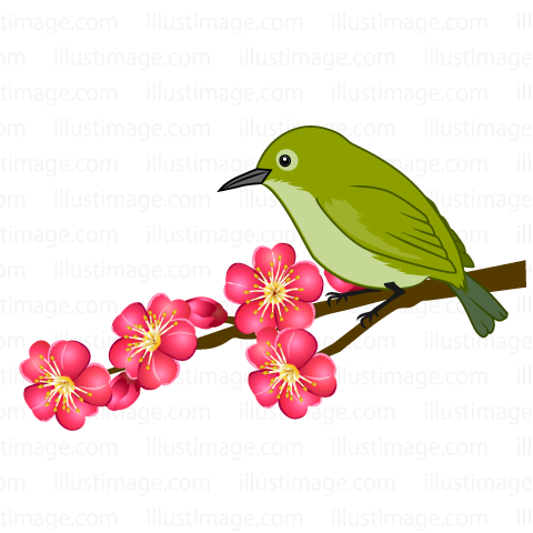 Cosmos clipart black and white Plum blossom  warbler Cripart