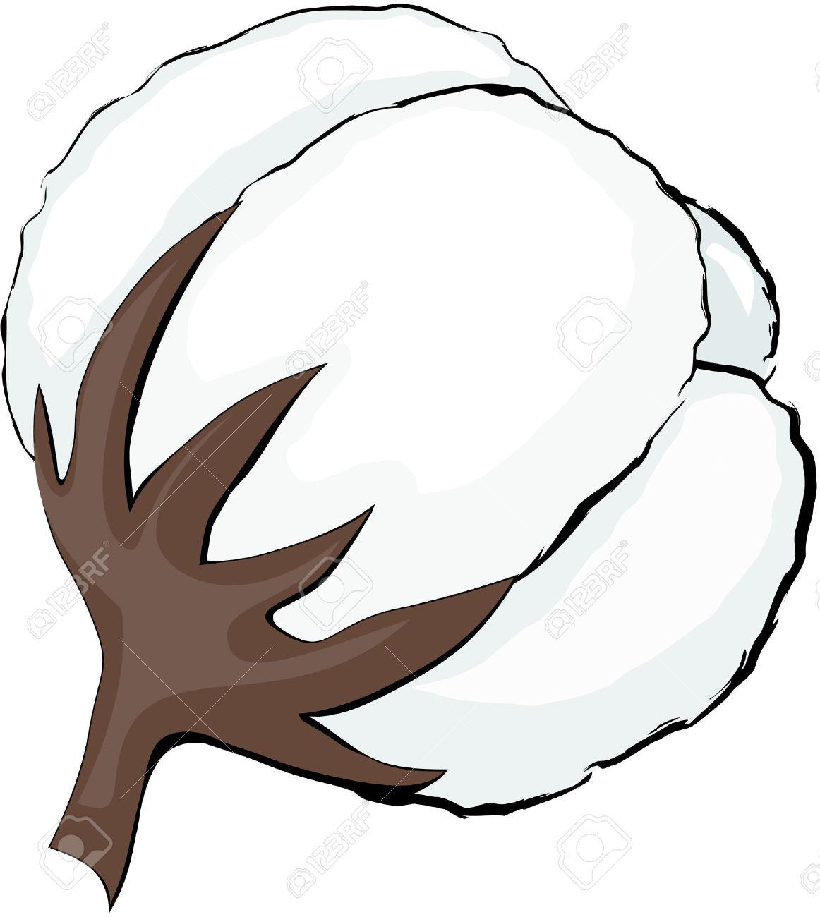 Cotton clipart  Clipart Cotton