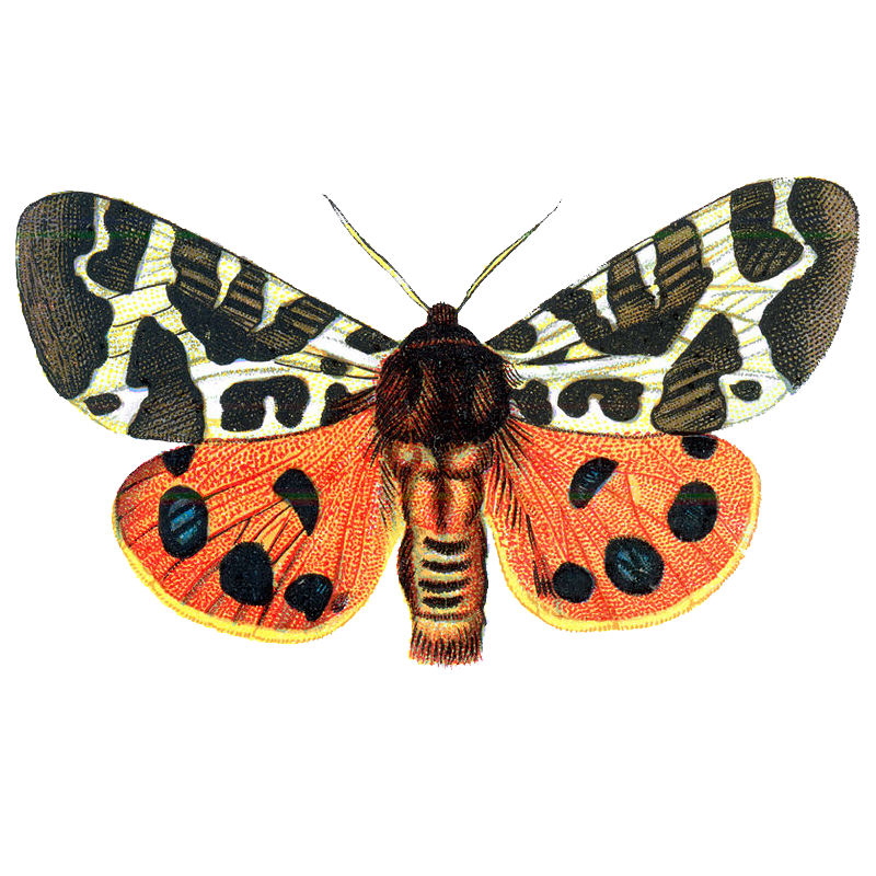 Bugs clipart orange butterfly For Free Clip Art Free