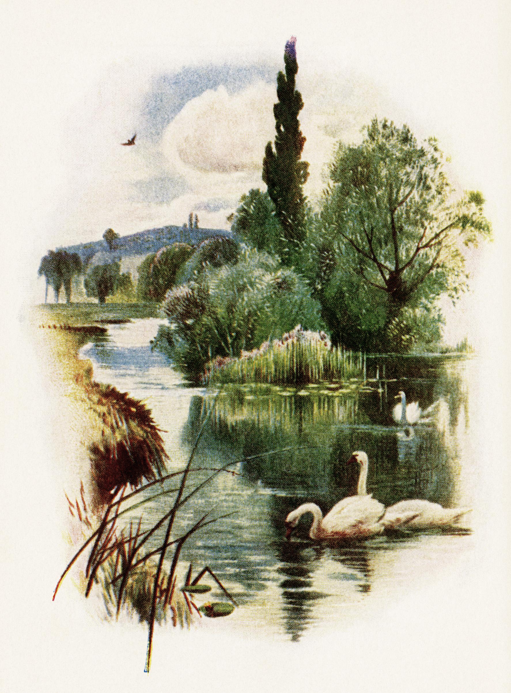 Countyside clipart outdoor scene Art art swan vintage outdoors