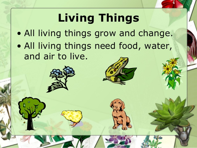 Plant clipart living thing Living Use Things on clipart