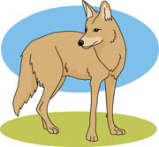 Coyote clipart Savoronmorehead free Clipart use Coyote