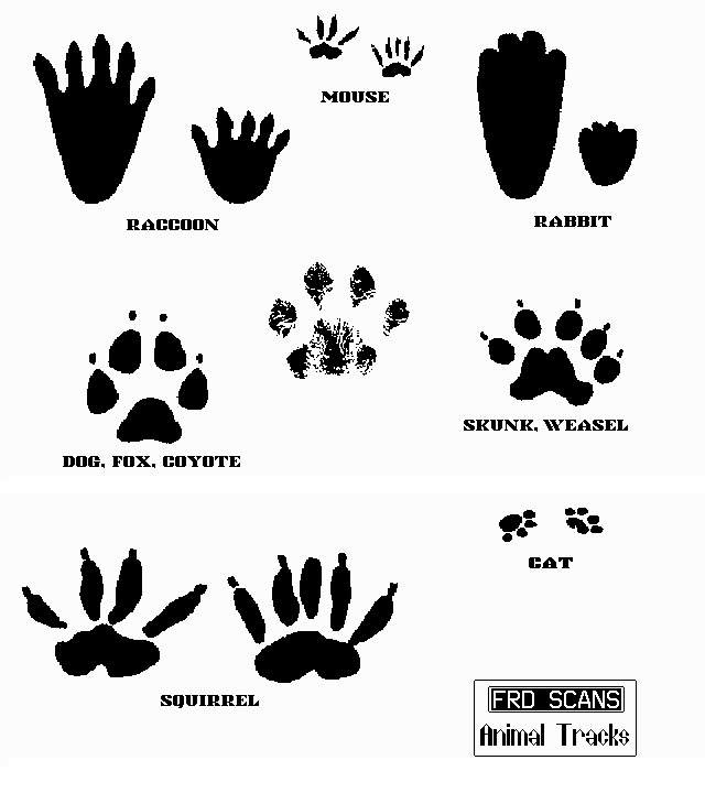 Mouse clipart footprint #14