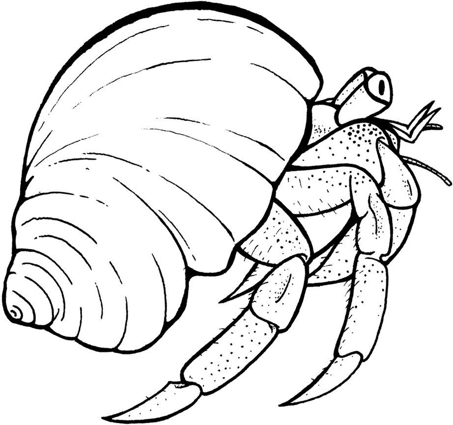 Crustacean clipart outline Crab white and clipartfest free