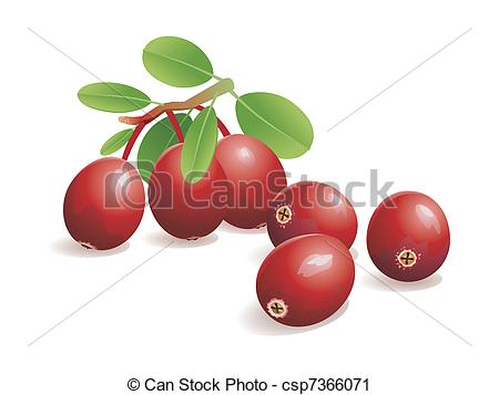 Cranberry clipart 2 vector 349 Images Cranberry