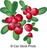 Cranberry clipart Images Green 2 Illustration 349