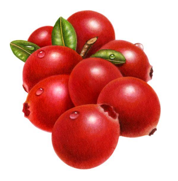 Cranberry clipart Cranberry Art IMGFLASH Clip Clip