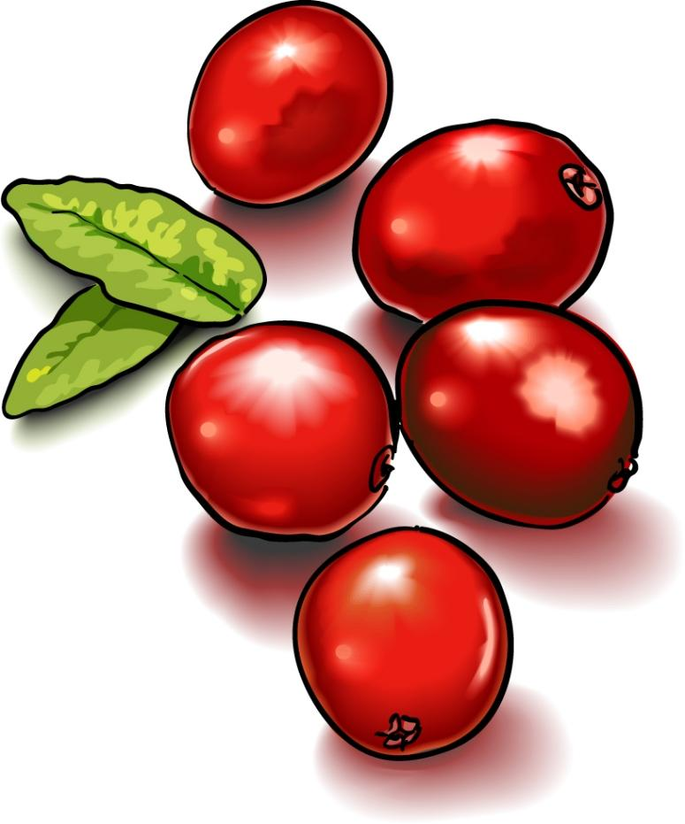 Single clipart cranberry Collection 20clipart clipart Cranberry Free