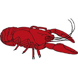 Crayfish clipart Free eps  crayfish download