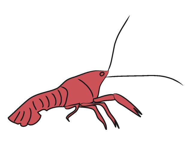 Crayfish clipart Clipart crawfish%20clipart Images Panda Clipart