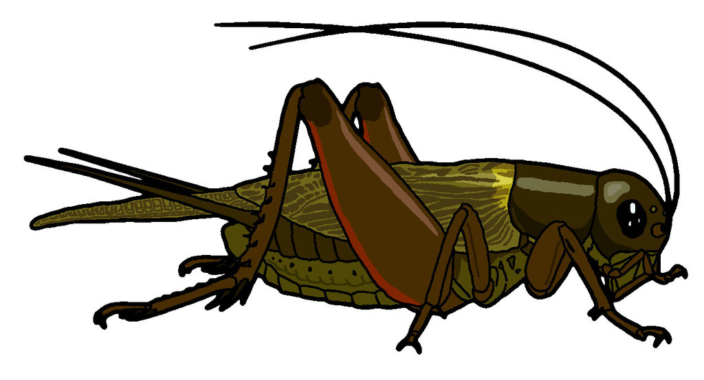 Brown clipart cricket Art art collection Clip Cricket