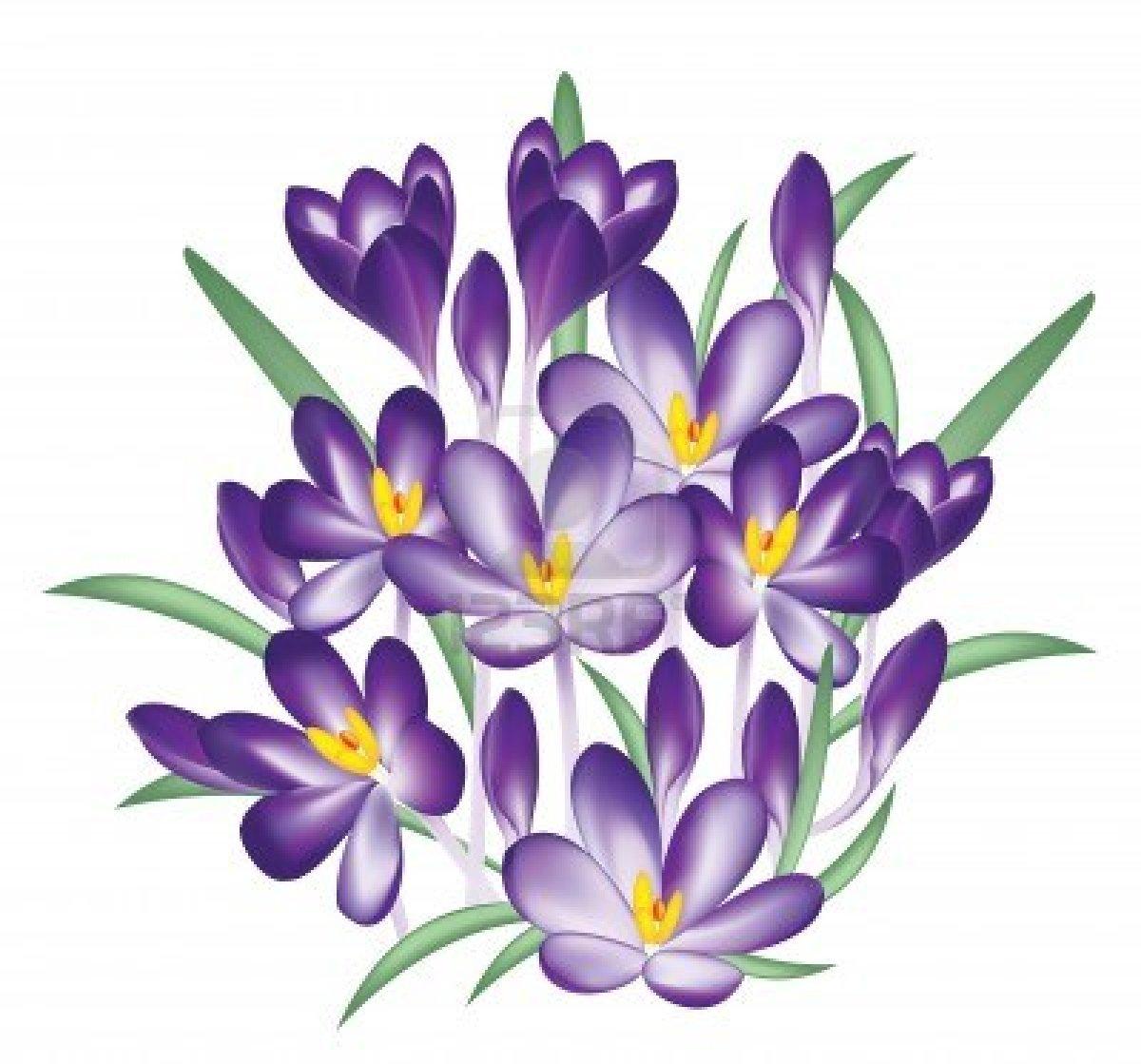 Crocus clipart Crocus Clip Crocus Art Purple